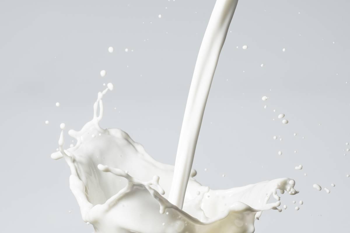 Mléko - Pešek - Rambousek | Slaný